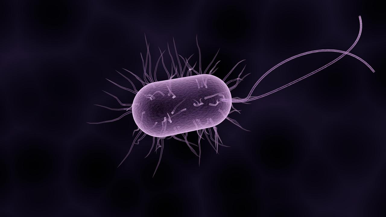年末に多い食中毒はノロウイルス
