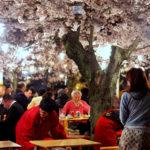飲食店 春のキーワード 桜・花見(エア花見)・ケータリング