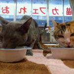ドッグカフェ・猫カフェをテナントに入れた時 大家さんが注意すべきこと
